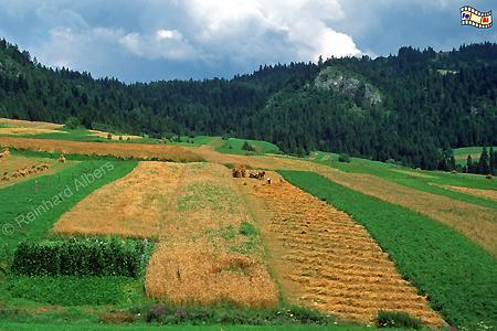 Landschaft im Pieniny-Nationalpark bei Sromowce Wyżne., Polen, Polska, Bilder, Fotos, Sromowce Wyżne, Pieniny, Nationalpark, Berglandschaft