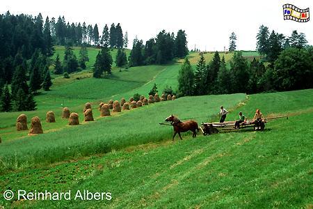 Berglandschaft bei Hałuszowa am Rande des Pieniny-Nationalparks., Polen, Polska, Bilder, Fotos, Hałuszowa, Pieniny, Nationalpark, Berglandschaft