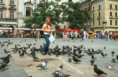 Die zahlreichen Tauben in der Krakauer Altstadt werden zwar gern von Kindern gefüttert, stellen jedoch eine Belastung für historischen Hausfassaden dar., Polen, Polska, Fotos, Bilder, Krakau, Kraków, Hauptmarkt, Rynek Główny, Tauben