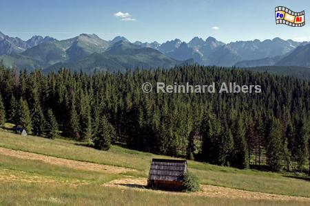 Gipfelsilhouette der Hohen Tatra., Polen, Polska, Fotos, Bilder, Hohe Tatra, Berge