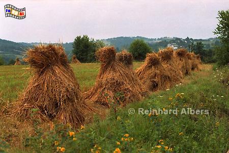 Getreidehocken, Polen, Polska, Landwirtschaft, Getreidehocken, Albers, Foto, foreal,