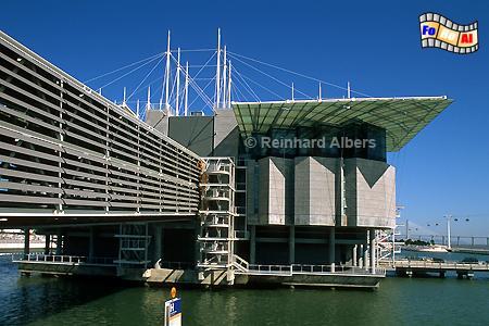 Das zur Expo 1998 errichtete Oceanario de Lisboa ist das größte Aquarium Europas., Lissabon, Lisboa, Expo, Aquarium, Oceanario, Fische