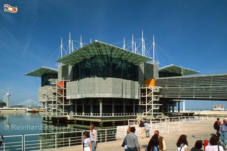 Das Oceanario de Lisboa befindet sich auf dem Expo-Gelände von 1998 direkt am Ufer des Tejo., Lissabon, Lisboa, Expo, Aquarium, Oceanario, Fische