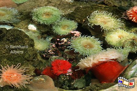 Wasserpflanzen im Oceanario de Lisboa auf dem Expogelände von 1998., Lissabon, Expo, Aquarium, Oceanario, Wasserpflanze