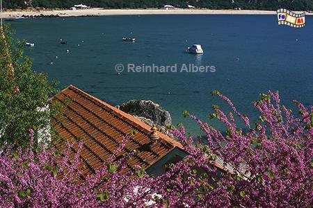 Bucht am Fuße des Arrabida-Gebirges, Portugal, Arrabida, Gebirge, Portinho, Atlantik, Bucht, Judasbaum, Albers, Foto, foreal,