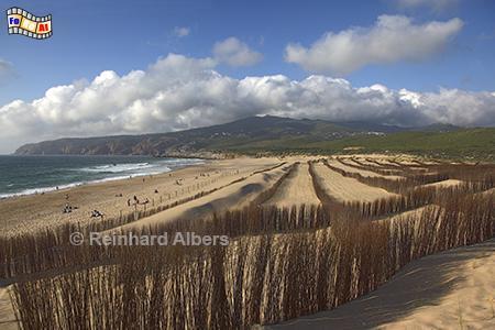 Guincho - Dünenschutz, Portugal, Lissabon, Atlantik, Guincho, Strand, Surfer, Kiter, Dünenschutz, Foto, Albers, foreal,,