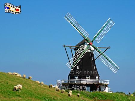 Insel Pellworm - Nordermühle oder auch Engelmühle genannt geht auf das Jahr 1777 zurück., Windmühle, Pellworm, Insel Pellworm, Nordermühle, Engelmühle, Waldhusen