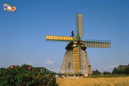 Insel Amrum - Die Mühle bei der Ortschaft Nebel beherbergt heute das Inselmuseum., Windmühle, Foto, Insel Amrum, Amrum, Nebel