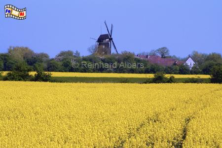 Insel Fehmarn, Windmühle, Schleswig-Holstein, Fehmarn