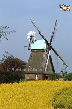 Quern-Nübbelfeld in Angeln (Schleswig-Holstein), heute als Ferienwohnung genutzt., Windmühle, Schleswig-Holstein, Angeln, Quern, Nübbelfeld