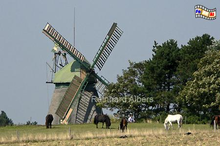 Insel Amrum bei der Ortschaft Nebel., Windmühle, Insel Amrum, Amrum, Nebel
