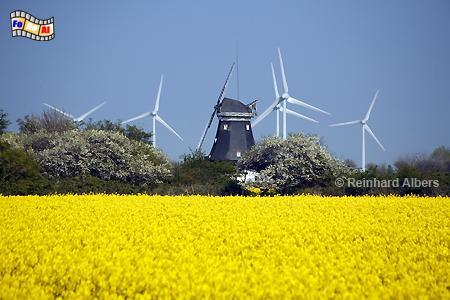 Die Südermühle in Petersdorf auf der Insel Fehmarn., Schleswig-Holstein, Windmühle, Petersdorf, Südermühle, Insel, Fehmarn, foreal, Albers