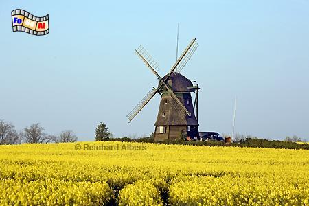 Die Farver Mühle aus dem Jahr 1828 befindet sich in Ostholstein und kann als Ferienwohnung gemietet werden., Windmühle, Farve, Ostholstein, Schleswig-Holstein, Albers, foreal, Foto