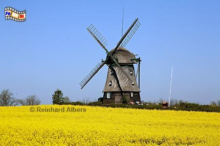 Farve, in der Gemeinde Wangels in Ostholstein. Die Erdholländermühle wurde 1828 errichtet., Windmühle, Farve, Ostholstein, Schleswig-Holstein, Albers, foreal, Foto