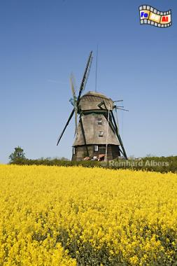 Farve - Windmühle aus dem Jahr 1828., Windmühle, Farve, Ostholstein, Schleswig-Holstein, Albers, foreal, Foto