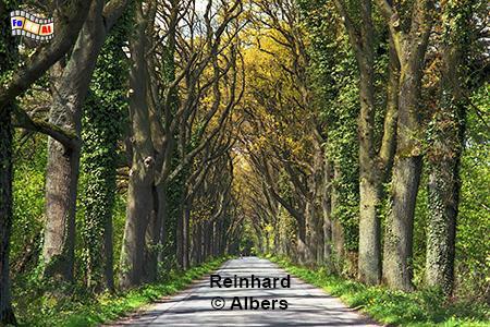 Allee bei Nehmten im Kreis Plön, Schleswig-Holstein, Nehmten, Allee, Frühjahr, Albers, Foto, foreal,