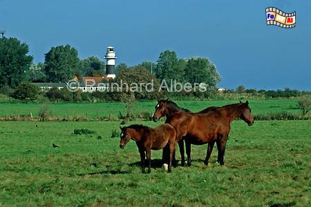 Der Leuchtturm von Kiel-Bülk markiert die Einfahrt zur Kieler Förde an der Westseite, Leuchtturm, Deutschland, Schleswig-Holstein, Ostseeküste, Kiel, Bülk