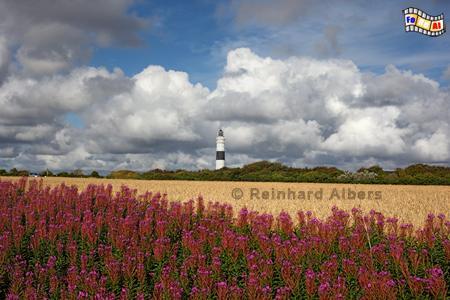 Kampen auf der Insel Sylt., Leuchtturm, Lighthouse, Phare, Kampen, Sylt, foreal, Albers, Foto,