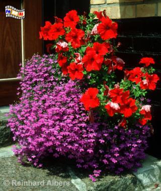 Blumenschale, Schleswig-Holstein, Nolde, Seebüll, Blumen, Blüten, Albers, Foto, foreal,