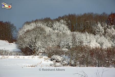 Winter in den Hüttener Bergen.,
