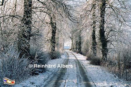Allee Gut Maasleben, Schleswig-Holstein, Schwansen, Maasleben, Allee, Winter, Albers, Foto, foreal,