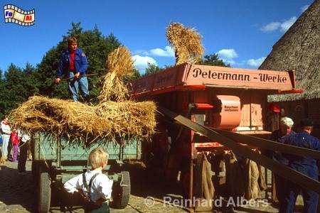 Historisches Dreschen im Freilichtmuseum Kiel Molfsee., Kiel, Freilichtmuseum, Molfsee, Albers, Foto, foreal,